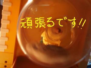 譟壼ュ・_convert_20090314184916