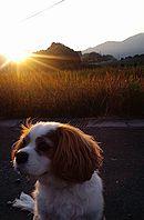 ベルと夕日
