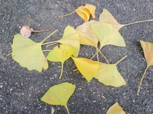 落ち葉もきれいだな。