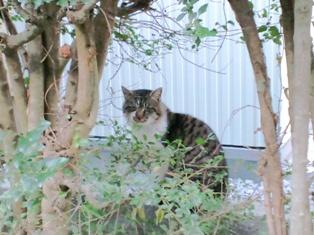 ネコちゃんがこっちを見てました