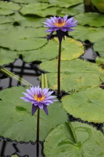 雨が似合う花1