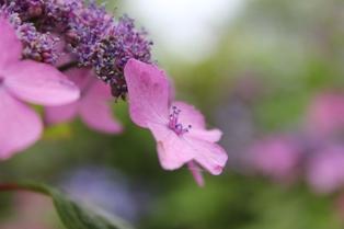 雨が似合う花2