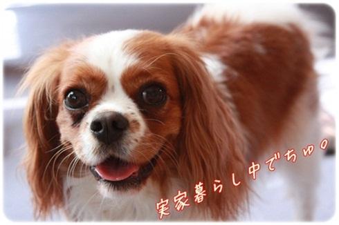 004_20110317194843.jpg