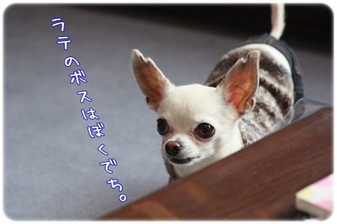 047_20110317195248.jpg