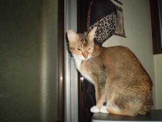 野次猫 (4)
