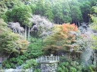 2008.11.18見帰りの滝周辺