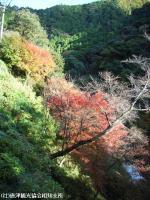 2008.11.18滝より100mほど下流