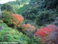 2008.11.18滝より100mほど下流②