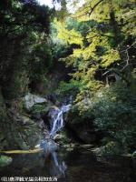 玉散りの滝(2008.11.19)
