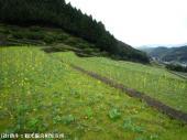 2009022620日本一石積み周辺01