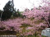 09里見荘(2009年2月27日)2