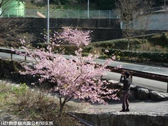 河津桜(2009年3月2日)34