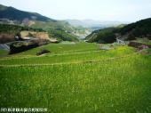 06大平棚田(2009年3月2日)14
