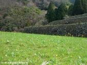 08大平棚田(2009年3月2日)05