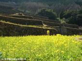 10大平棚田(2009年3月2日)19