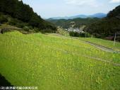 18日本一石積み周辺(2009年3月2日)19