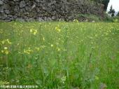 02交流広場(2009年3月9日)03