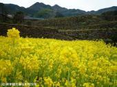 20日本一石積み周辺(2009年3月9日)09