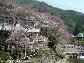 里見荘(2009年3月17日)01