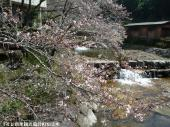 里見荘(2009年3月17日)03