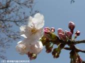 里見荘(2009年3月17日)05