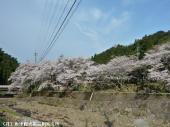 里見荘(2009年3月21日)09
