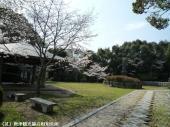 幡随院長兵衛公園(2009年3月23日)04