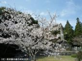 幡随院長兵衛公園(2009年3月23日)05
