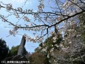 幡随院長兵衛公園(2009年3月23日)07