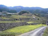 日本一石積み周辺(2009年3月28日)01