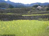 日本一石積み周辺(2009年3月28日)02