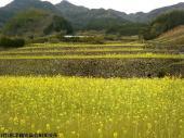 日本一石積み周辺(2009年3月28日)04
