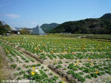 佐里温泉(2009年3月30日)01