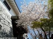 唐津城(2009年3月30日)03