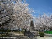 唐津城(2009年3月30日)08