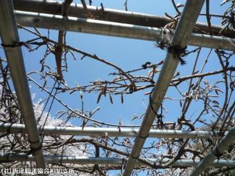 唐津城(2009年3月30日)14