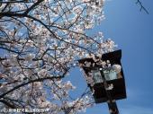 唐津城(2009年3月30日)15
