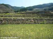 大平棚田(2009年3月31日)01