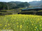 日本一の石積み周辺(2009年3月31日)03