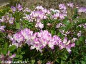 山道に咲いていた花(2009年3月31日)06
