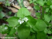 山道に咲いていた花(2009年3月31日)07