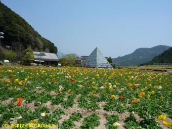 佐里温泉(2009年4月7日)01
