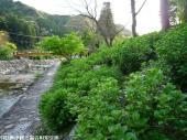 05.ホタル橋川向こう(2009年4月17日)02