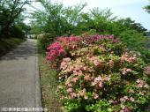鏡山(2009年4月22日)03