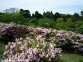 鏡山(2009年4月22日)05