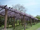 鏡山(2009年4月22日)08