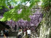 唐津城(2009年4月22日)02