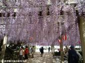 唐津城(2009年4月22日)03