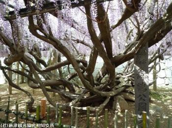 唐津城(2009年4月22日)04
