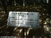 唐津城(2009年4月22日)05